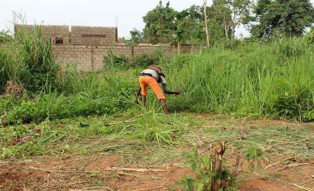 Waren maczetą zbija trawę. Tutaj będą orzeszki ziemne. Są używane do robienia sosów które są bardzo popularne
