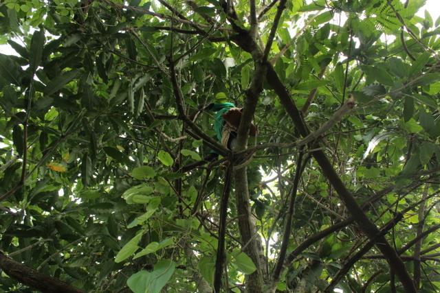 Po drodze wszyscy wpadają pod drzewo / na drzewo z mango i wypełniają kieszenie i torebki owocami. Później to będzie fajnym dodatkiem podczas przerw